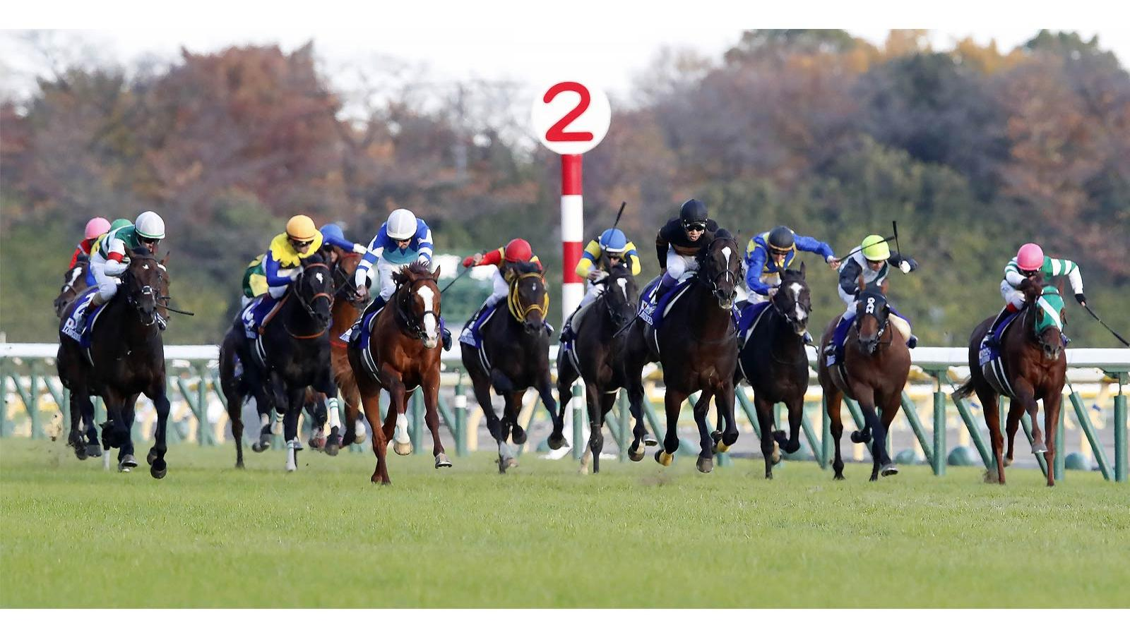Japan Cup in association with Longines; Horse Racing; 2017