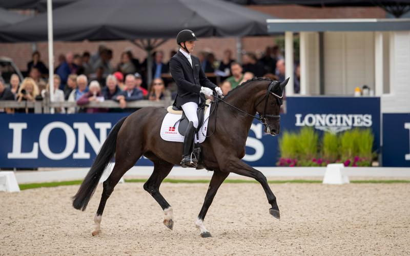 Longines FEI/WBFSH World Breeding Dressage Championships for Young Horses; Pferdezucht; 2019